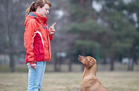 """המשמעת מתישה את כולם. מילר: """"הכלבים שקיבלו הוראה לשבת בלי לזוז התעייפו הרבה יותר מהכלבים שהתרוצצו. לא נשארה להם אנרגיה לצעצועים"""""""