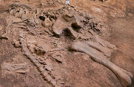מאובן דינוזאור באתר חפירות בסין. מבין הכחדות רבות, רק בזו נמצאו ראיות לאסון שמקורו חוץ־ארצי