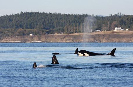 סלפי עם לווייתנים: 10 מקומות מעולים לצפייה מקרוב ביונק הימי