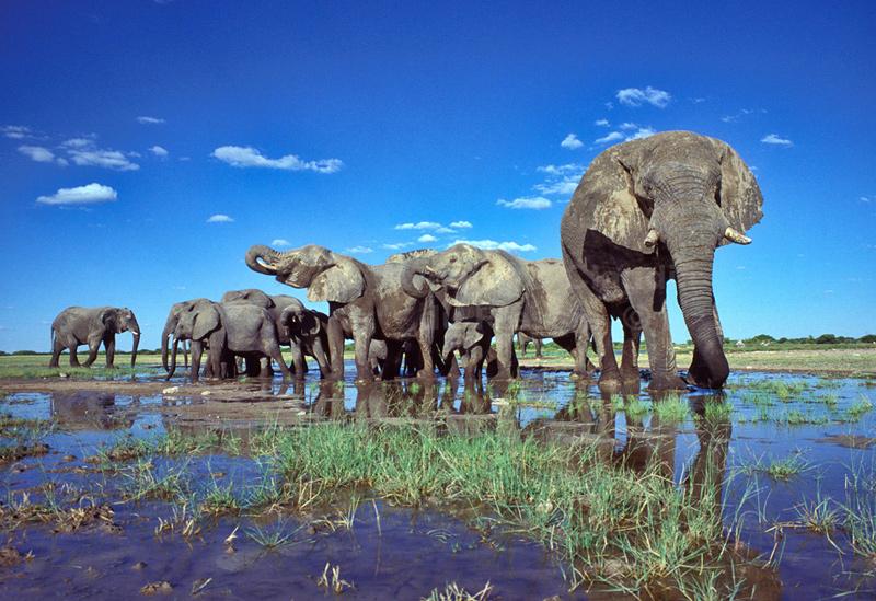 נמיביה- יעד תיירות שלא תרצה לפספס