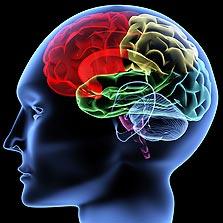 המוח האנושי. משהו עובר עליו