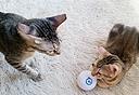 Sphero. החתולים אהבו, צילום: ליאור באקאלו