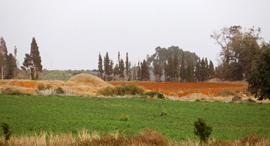 קרקע חקלאית (ארכיון), צילום: נמרוד גליקמן