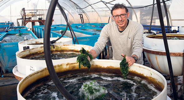 Entrepreneur Sees a Future Filled with Seawater Seaweed Farming Pools