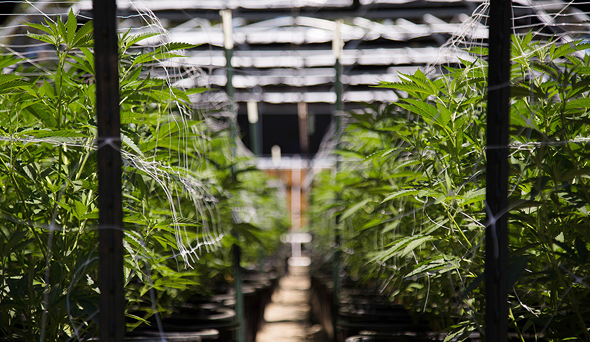 Medical Cannabis Company Together Pharma to Acquire Jerusalem-based Cannabliss for $3.9 Million