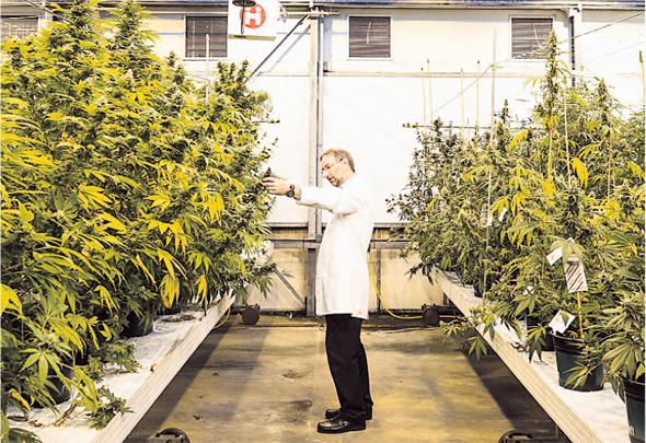 Cannabis E-commerce Venture Seeks to Merge with Tel Aviv Shelf Company