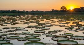 פוטו wetland פנאטנל ברזיל, צילום: שאטרסטוק