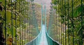 פוטו טיולי יער קוסטה ריקה, צילום: שאטרסטוק