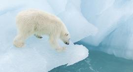 פוטו איים עם חיות בטבע נורווגיה איי סוואלבארד , צילום: שאטרסטוק