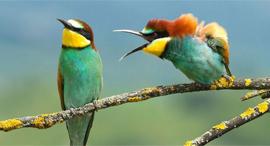פוטו תמונות מצחיקות של בעלי חיים ציפורים, צילום: Vlado Pirsa