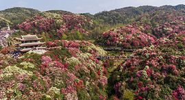 פוטו אביב פריחה ביילי אזילי סין, צילום: גטי אימג'ס