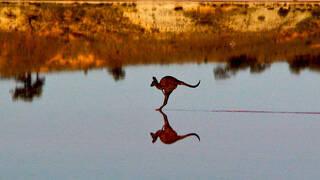 פוטו תחרות צילומי טבע אוסטרליה קנגורו על המים , צילום: Christian Spencer