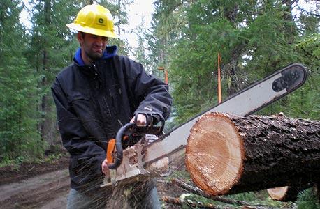 חוטב עצים, אורגון