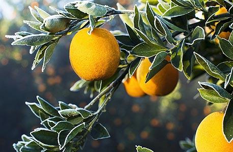החקלאות החדשה: ייצור מקומי וידידותי לסביבה