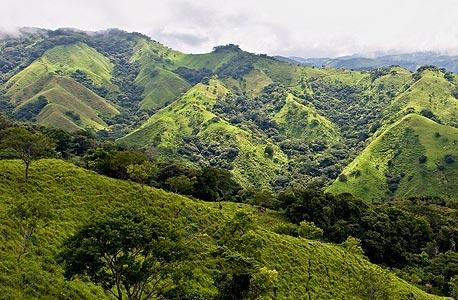 מינים נכחדים ביערות, צילום: shutterstock