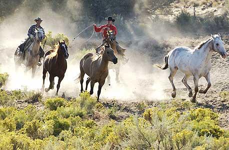 קליפורניה, V6 Ranch, צילום: shutterstock