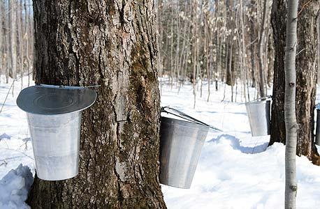 איך נשמע עץ שמתעטש?