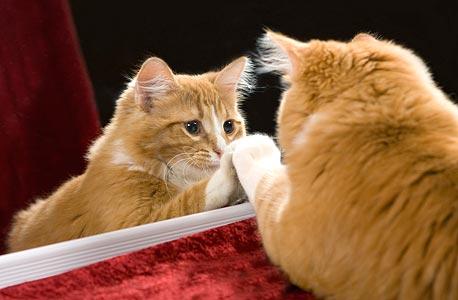 רק חלק מבעלי החיים מסוגלים לזהות את עצמם בראי