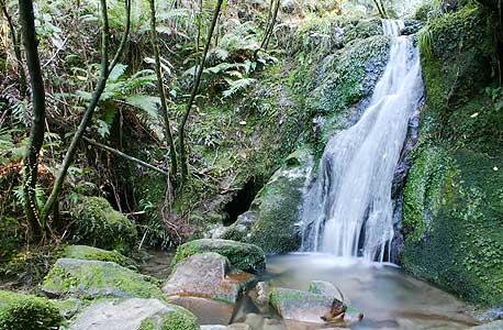 פארק בניו זילנד. עוד סיבה לכך שתושבי המדינה מרוצים בהחלט, צילום: shutterstock