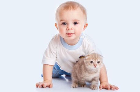 גורי חתולים הם יצורים סקרנים כמו גורי האדם