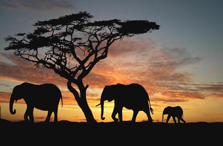 Elephants. Photo: Shutterstock