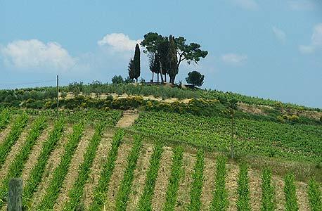 הכרמים של בית לורן- פרייה בחבל שמפניה