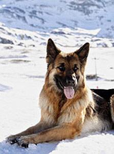 גונתר הרביעי. הכלב העשיר בעולם