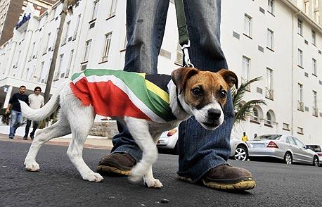 כלב מדרום אפריקה. כעת נותר לראות עם האחדות הלאומית שייצר המונדיאל תשאר גם אחריו