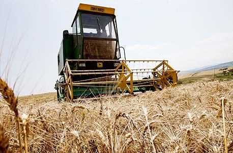 מחירי הפסטה, האורז, הקקאו והסוכר צפויים לעלות אחרי החגים