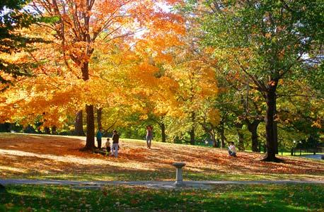 עצים בשלכת. תעלומת העלים האדומים