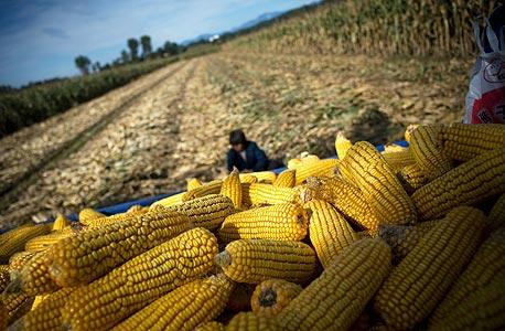 Oxfam: מחירי המזון יוכפלו בתוך שני עשורים
