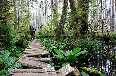 ווסט קואסט טרייל, קנדה. זאבים, נמרים, גשרים וסולמות עץ