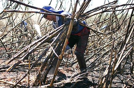 חקלאי בברזיל חותך קנה סוכר, צילום: בלומברג