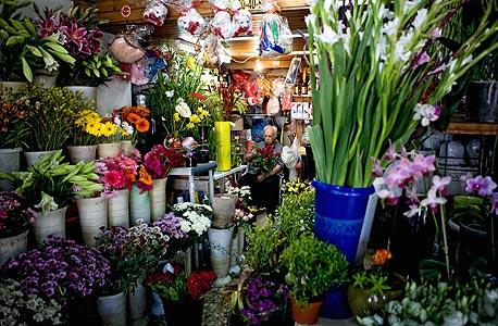 חנות פרחים. מתח רווחים של 200% על כל פרח, צילום: דניאל דה אלבי