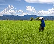 וייטנאם. מקום 2