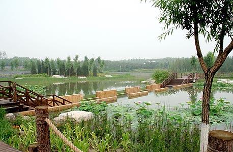 אזור הביצות בפארק היער. ריאה ירוקה משמעותית