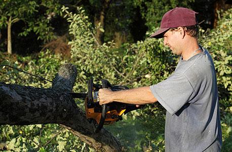 חוטב עצים (ארכיון)