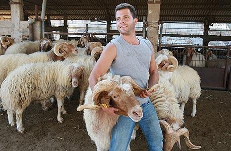 """35 שקל לק""""ג כבש חי, לפני שחיטה, ניקוי והכנה למאכל"""