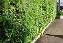 גינה על הקיר (צילום: גרין ליבינג טכנולוג'י), צילום: גרין ליבינג טכנולוג'י