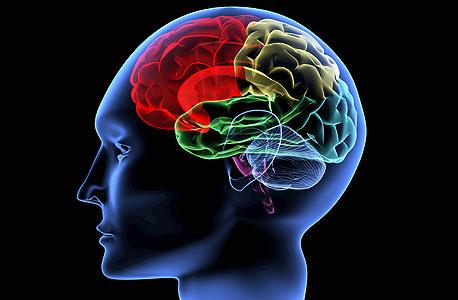 הדמיה של המוח האנושי. עושים שימוש בכל האזורים, צילום: shutterstock