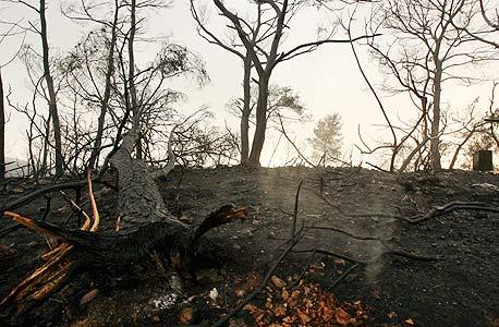 יערות הכרמל אחרי השריפה, צילום: אלעד גרשגורן