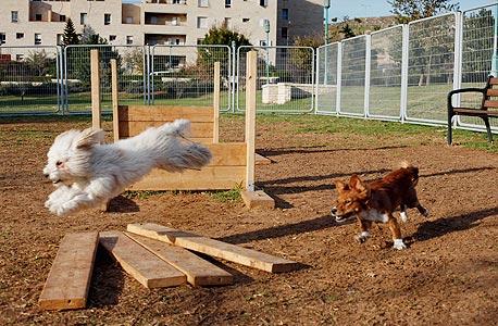 פינת כלבים בפארק במודיעין, צילום: עמית שעל