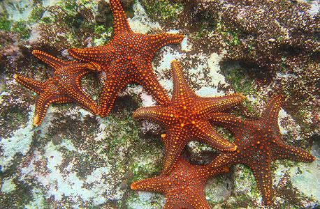 כוכבי ים בנשיונל ג'אוגרפיק, צילום: בלומברג
