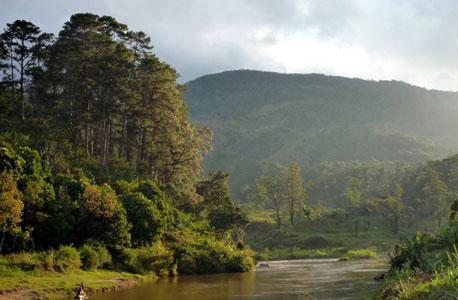 טהומאנו, פרו. כריתת העץ האדום מסכנת את יער הגשם