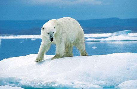 מחקר: התחממות הקוטב הצפוני תעלה 60 טריליון דולר