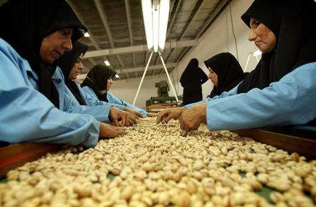נשים מאיראן ממיינות פיסטוקים