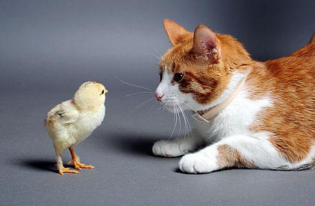 בכל זאת נותרו בעולמנו תופעות כמו רחמים וחמלה, אהבה ונאמנות