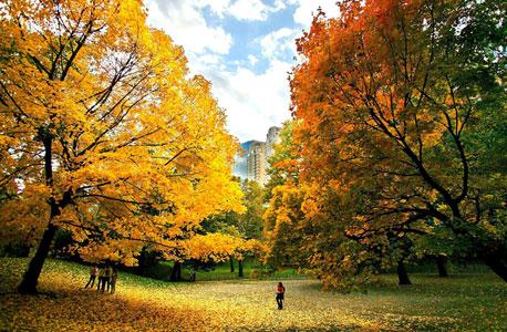 פארק מתוכנן היטב יכול לשפר את פעילות המוח בתוך דקות ספורות, אלא שמרבית הפארקים העירוניים בעולם אינם מתוכננים נכון