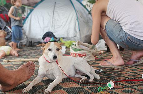 כלבים במאהל ברוטשילד