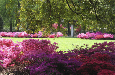 הגן הבוטני, ברוקלין. מוזיאון עם עצי בונסאי בני מאות שנים